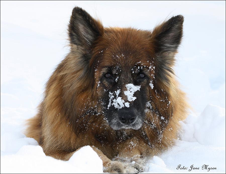 Når vi er ute vinterstid, ser Connie ofte slik ut2