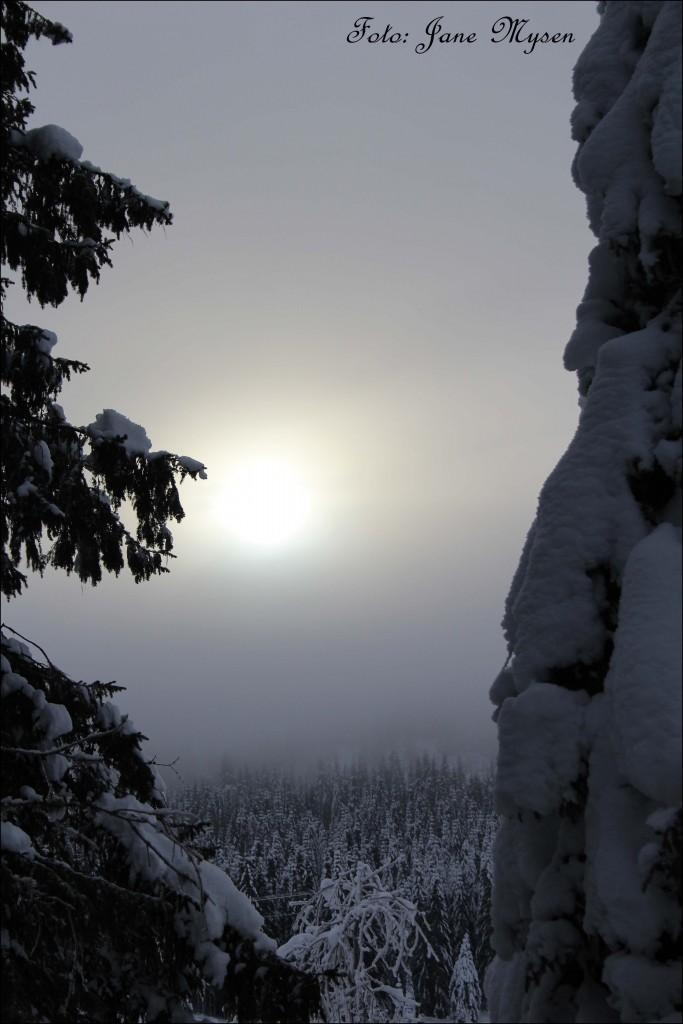 Og skogen ligger der, mystisk, kald og trolsk.