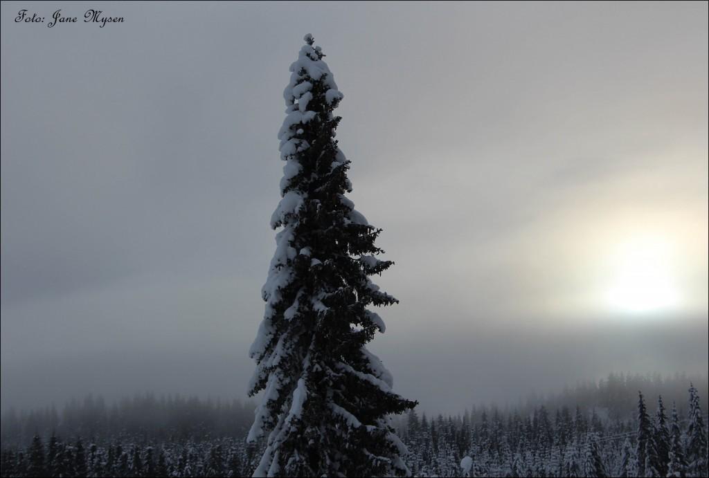 Så vakker kan skogen være en vinterdag i januar.