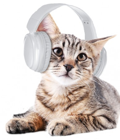Katt_