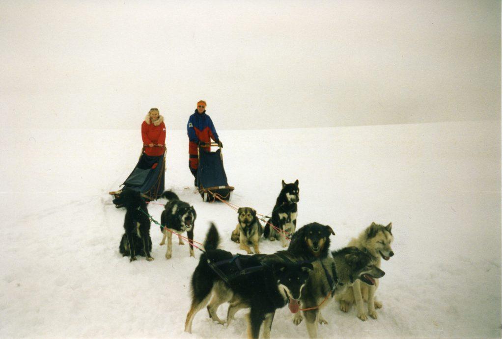 Polar hunder005_