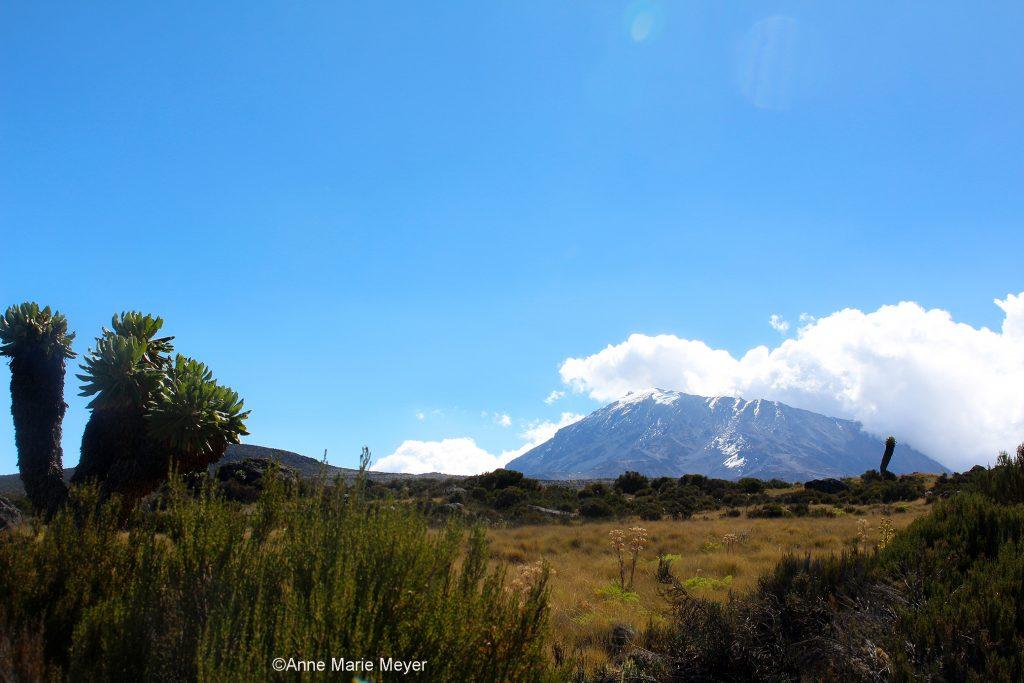 Kilimanjaro, Afrikas høyeste topp