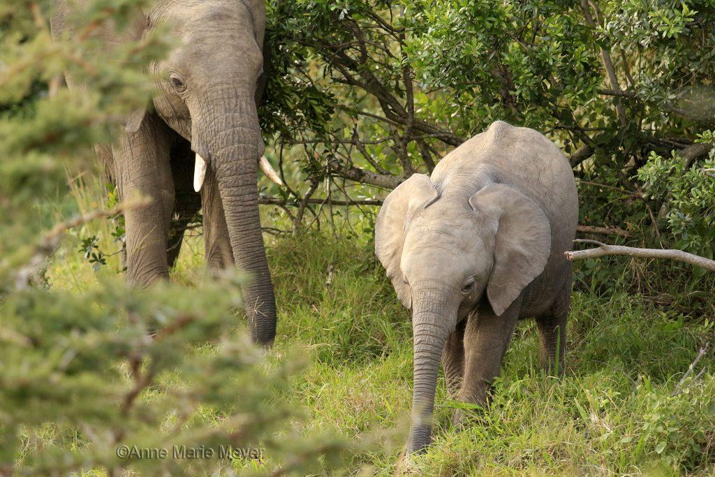Elefantmor og -barn