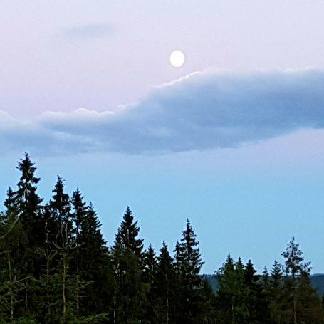 Nydelige Finnskogen.